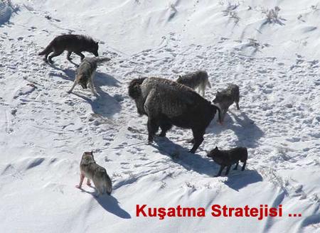 cengizpak_kusatma
